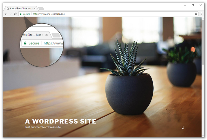 Your WordPress website now shows in https